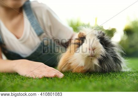 Little Child With Guinea Pig Outdoors. Lovely Pet