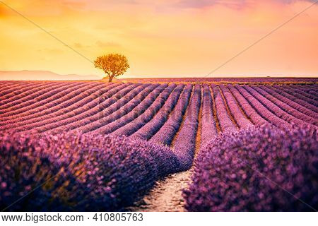 Stunning Summer Landscape With Lavender Field At Sunset. Blooming Violet Fragrant Lavender Flowers W