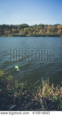 A Group Of Swans On A Small Lake In The Autumn. Fishing Tackle With A Green Bell In The Foreground O