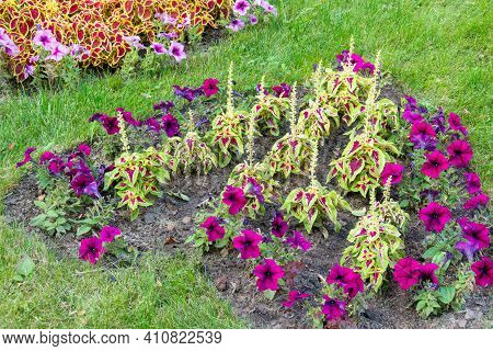 Beautiful Flower Bed In The Park \