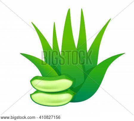 Aloe Vera Leaves Isolated On White, Aloe Vera Stalk, Clip Art Aloe Vera Leaf