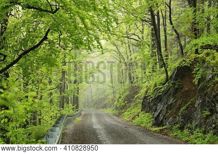 Path trees spring forest landscape Nature trail background Nature landscape fog Nature landscape Nature landscape Nature landscape Nature background Nature landscape Nature background Nature background Nature landscape Nature background landscape woods.