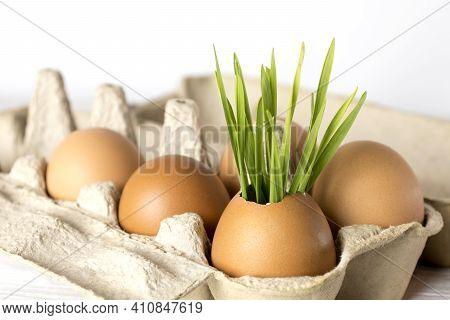 Reuse, Reduce, Recycle. Reuse Egg Tray And Eggshells To Grow Plants. The Concept Of Ecology, Eco-pro