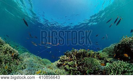 Coral Reef And Tropical Fishes. The Underwater World Of The Philippines. Underwater Colorful Tropica