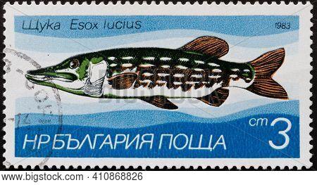 Republic Of Bulgaria - Circa 1983: Postage Stamp 'northern Pike - Esox Lucius' Printed In Republic O