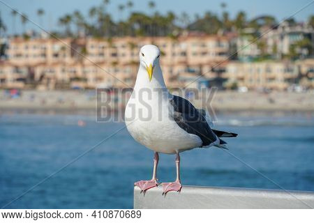 Close Up Of Seagull Standing On A Pier With Sea And Coastline On The Background. Seagull Waiting On