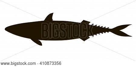 Atlantic Mackerel Silhouette. Hand Drawn Realistic Illustration.