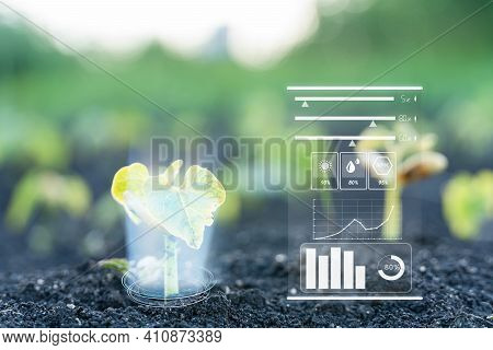 Monitoring The Growth Of Plants. Innovation And Modern Technology. Quality Control, Increase Crop Yi