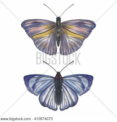 Watercolor Butterflies. Two Bright Butterflies Isolated On A White Background. Illustration Butterfl