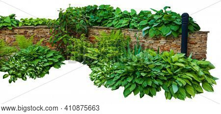 Detail of a botanical garden isolated on white background. Garden design with grass growing up between the stones.