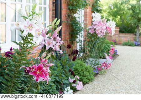 Flower Border In An English Garden With Oriental Lilies, Lily, Uk