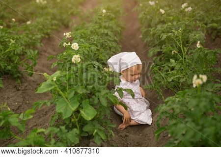 A Little Barefoot Girl Crawls Among The Rows Of Blooming Potatoes. Young Potato Plant Growing On The