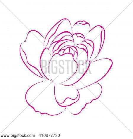 Outline Peony Flower, Isolated On White Background. Pink And White Botanical Peonies Line Drawing. V