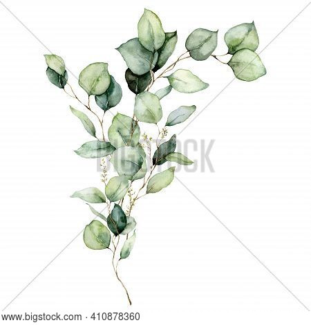 Watercolor Floral Card Of Eucalyptus Leaves, Seeds And Branches. Hand Painted Silver Dollar Eucalypt