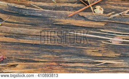 Wet Tree Bark Texture, Abstract Shape Of Wet Wood