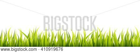 Garden Grass. Panorama Of A Growing Microgreen Sprouts.