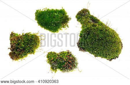 Green Moss On A White Isolated Background