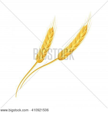 Ears Of Wheat Or Rice. Agricultural Wheat Spikelets Symbols Isolated On White Background. Organic Fa