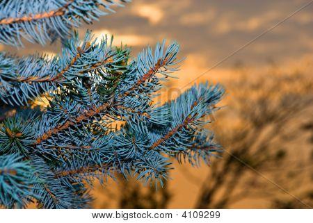 New-Year Tree.