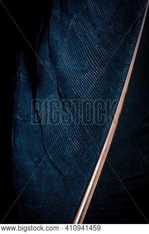 Blue Bird Feather On Black Isolated Background