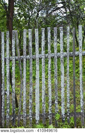 Mossy plank fence made of wooden beams. Old fence in the village near the house. A fence made of boards around the garden area.