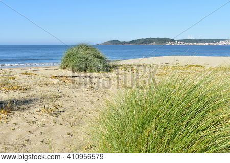Beach With Marram Grass On Sand Dunes At Famous Rias Baixas Region. Muxia, Coruña, Galicia, Spain.