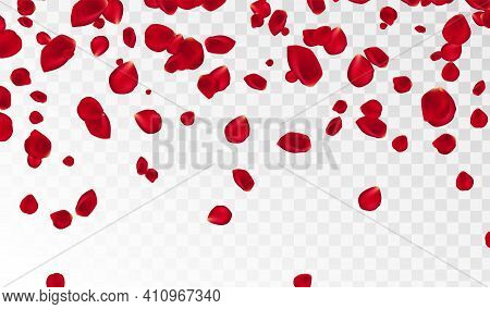 Abstract Background With Flying Red Rose Petals On A White Transparent Background. Vector Illustrati