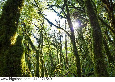 Beautiful Landscape With Forest Jungle Trees. Wonderland Fairy Tale Scenery. Sun Shines Through Tree