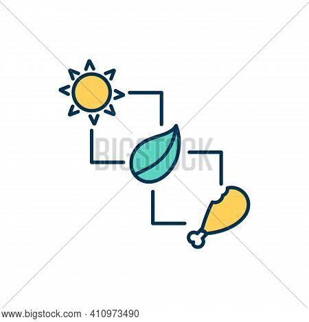 Food Chain Rgb Color Icon. Energy In Food Form Transferring From Organism To Organism. Sustainable S