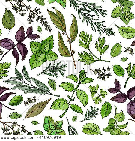 Pattern Food Color Herbs. . Italian Herb Drawn Black Lines On A White Background. Vector Illustratio