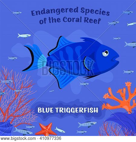 Coral Reef Inhabitants. Endangered Fish Species. Threatened Fish Stocks. Blue Triggerfish. Save The