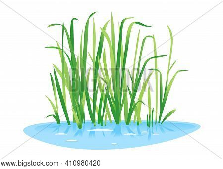 Sweet Flag Plant Grow Near The Water Isolated Illustration, Water Plants For Decorative Pond In Land