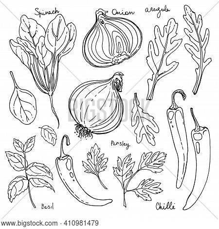 Herbs. . Italian Herb Drawn Black Lines On A White Background. Vector Illustration. Basil, Chilli, O