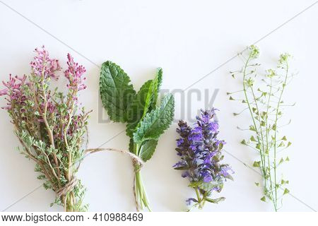 Various Kinds Of Fresh Garden Herbs, Fumaria Officinalis, Leaves Betonica Officinalis, Ajuga Reptans