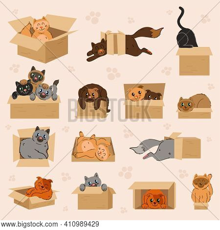 The Collection Of Cute Cute Car In The Paper Box In Flat Vector Style. Cute Kittens And Cats Looking
