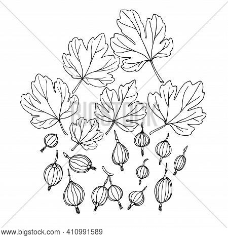 Set Of Gooseberries With Leaves, Elements Of Decorative Ornament Or Pattern, Vector Illustration Wit