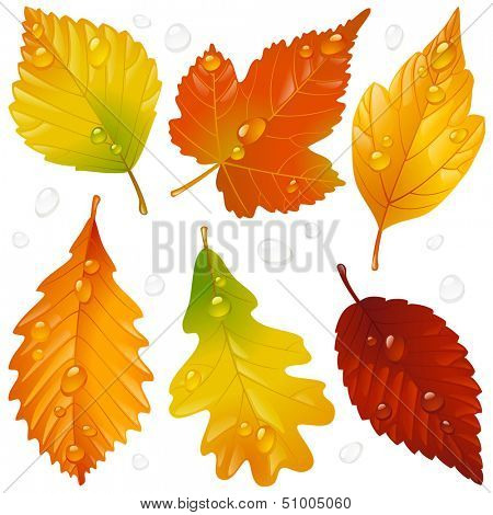 Vector autumn leaf set isolated on white background