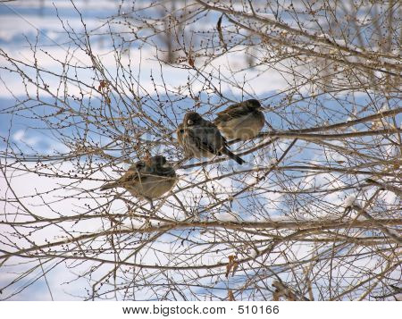 frozen sparrows poster