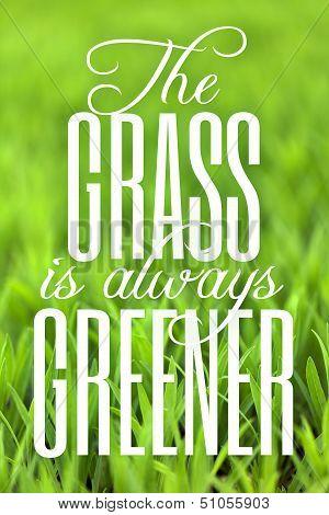 Green Grass Foliage