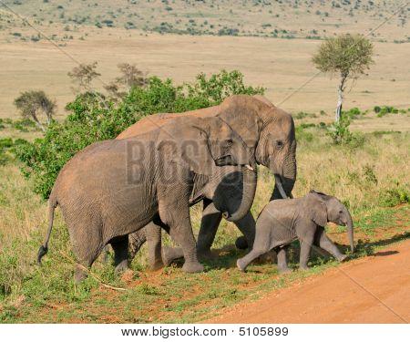 elephant's family amboseli kenya african wildlife safari poster