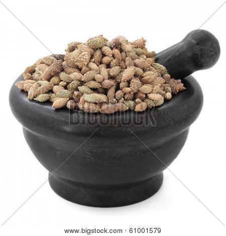 Cocklebur xanthium fruit chinese herbal medicine in a black stone mortar with pestle over white background. Cang er zi poster