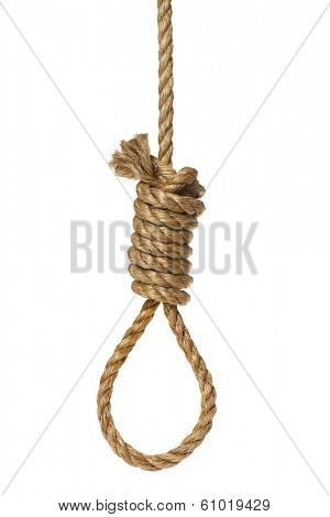 Rope knotted in noose on white background