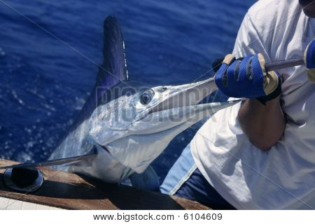 Billfish white Marlin catch and release on boat board poster