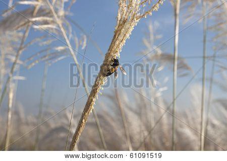 Honey Bee in the Meadow