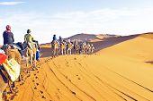 Camel caravan going through the sand dunes in the Sahara poster