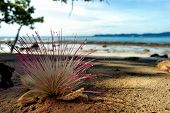 paradise flower. photo on the sandy beach in the tropics. poster