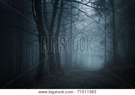 Deep dark woods with fog at night on Halloween
