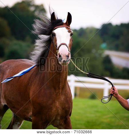 Horse In Harness Outside In A Field