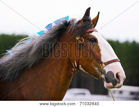 Horse In Harness Outside In A Field - Close Up