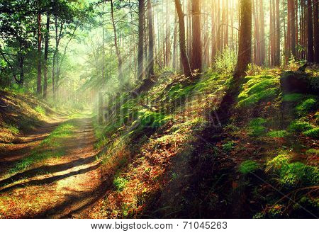 Autumn Forest. Magical Park. Beautiful Scene Misty Old Forest with Sun Rays, Shadows and Fog